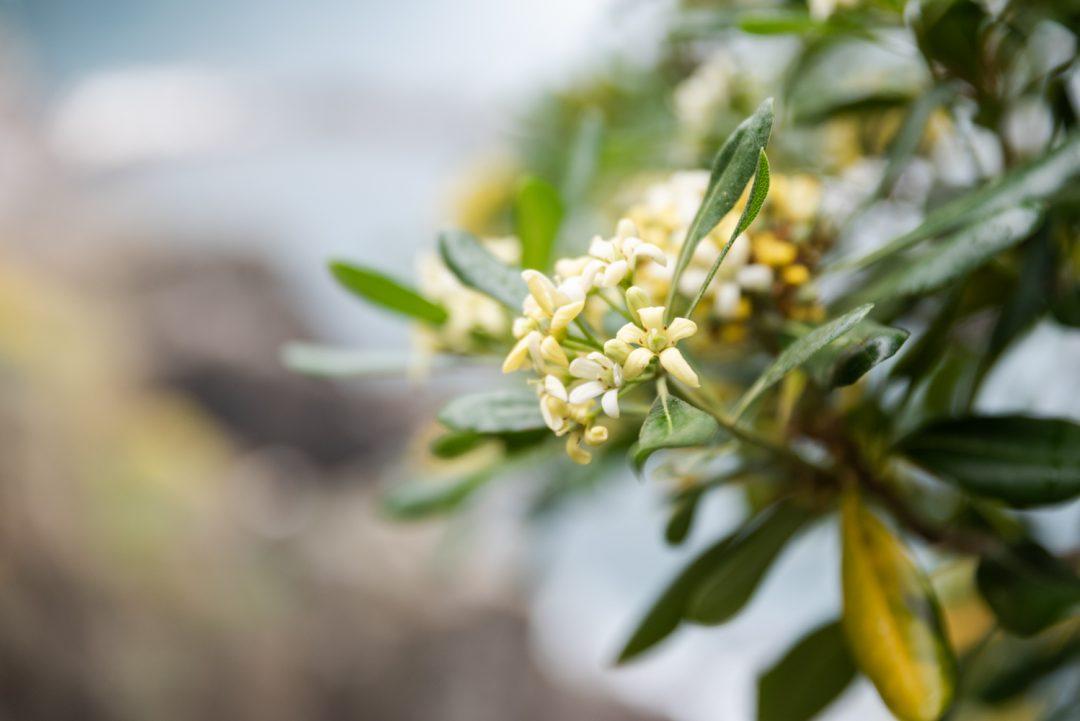 Végétation au Cinque Terre