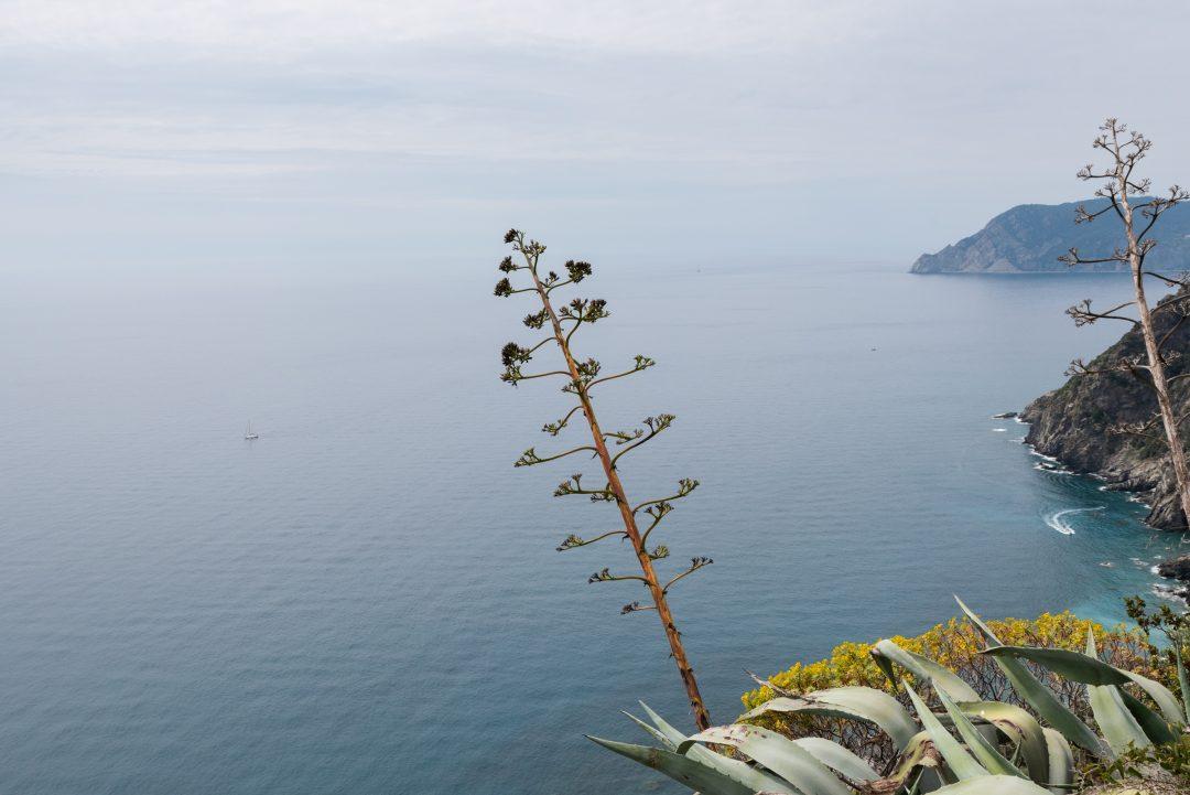 Nature sur les sentiers des Cinque Terre
