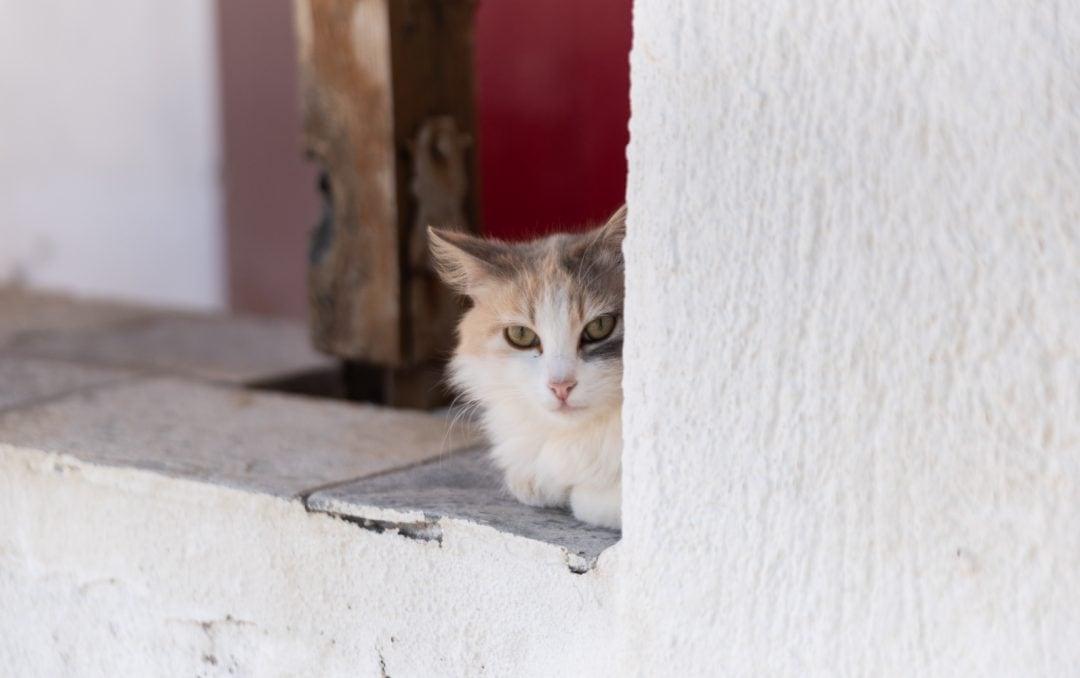 Chat à Fourkovouni