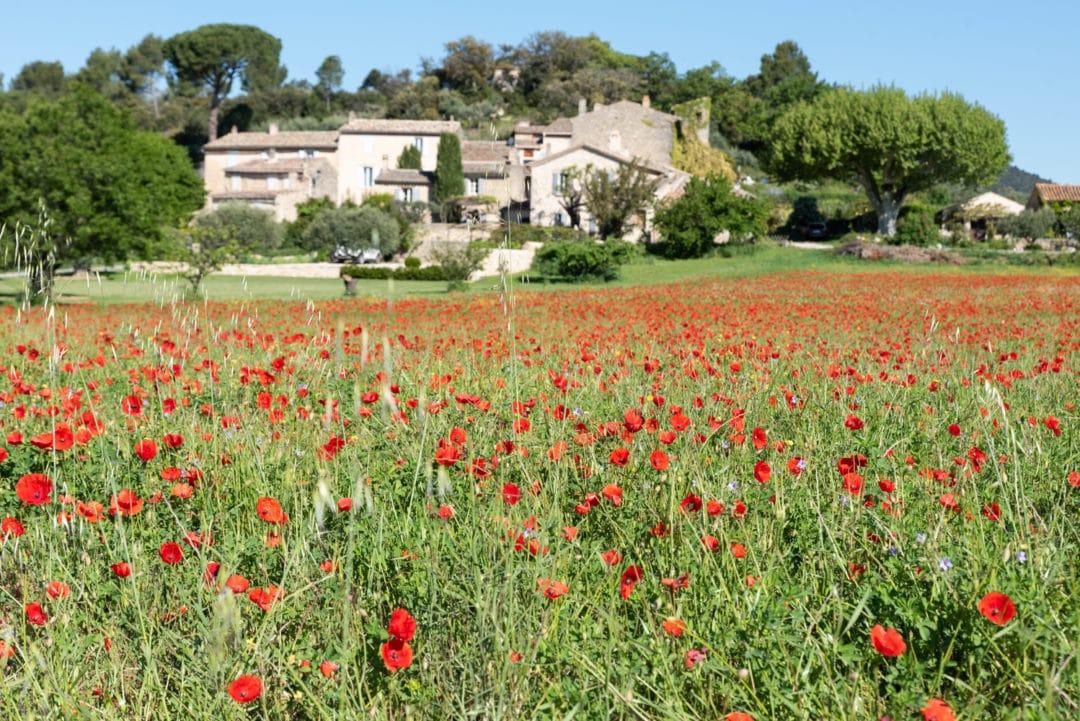 champs de coquelicots à Lourmarin