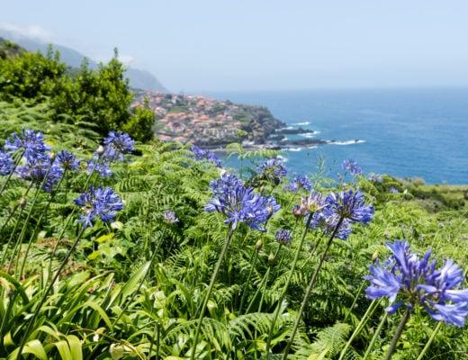 Madère île aux fleurs