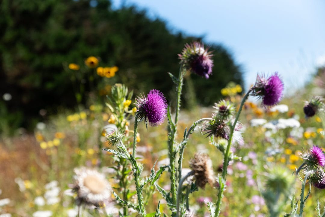 fleurs Saint-Briac-Sur-Mer