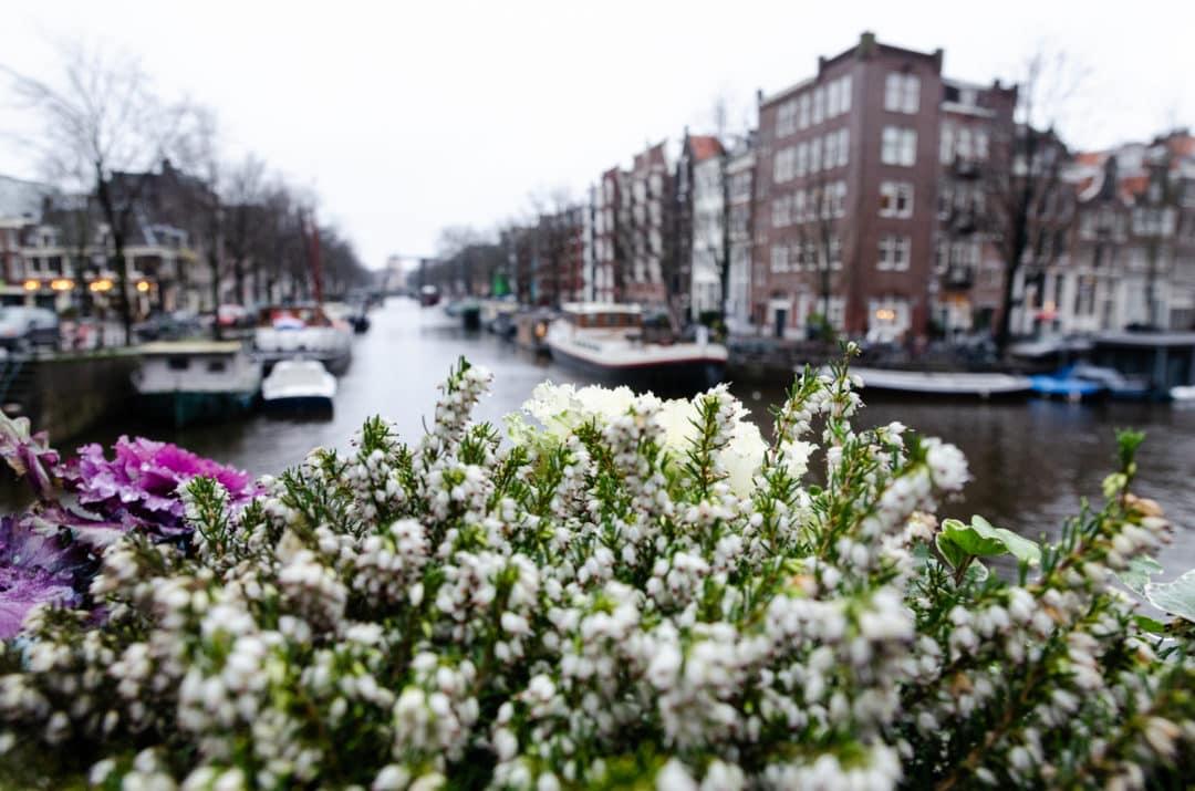 Fleurs à Amsterdam